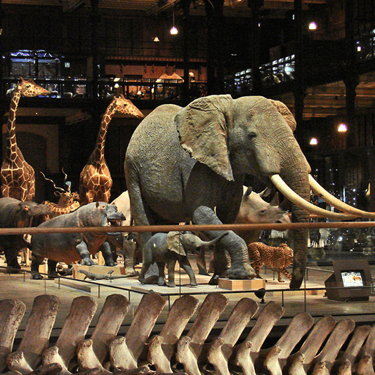 Grande galerie de l'évolution à Paris